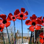 A Sea of Poppies in Remembrance